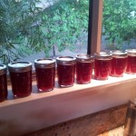 Jam jars ready for freezer